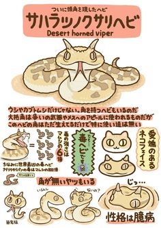 Even snakes can be kawaii :) They slick are Cute Animal Drawings, Cute Drawings, Fluffy Animals, Animals And Pets, Pretty Animals, Cute Animals, Japanese Animals, Animal Graphic, Animal Facts