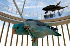 Mooie combinatie van aquarium en vogelkooi