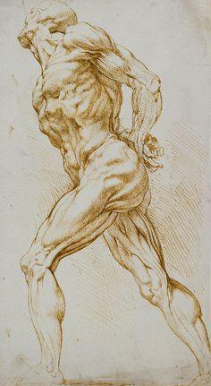 Artist: Peter Paul Rubens {artistic discreet muscular nude male human figure anatomy drawing} / trabalho x Male Figure Drawing, Life Drawing, Figure Drawing Reference, Painting & Drawing, Anatomy Sketches, Anatomy Drawing, Anatomy Art, Human Anatomy, Anatomy Study