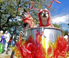 This is the cutest Barkus costume I've seen.  CRAWFISH! (The Krewe of Barkus is a New Orleans Mardi Gras parade whose participants are dogs costumed according to a central parade theme and escorted by their human owners.)