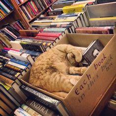 Store Cat.  Aardvark Books. San Francisco, California