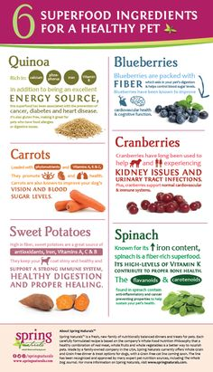 Spring Naturals is a complete family of dinners and treats for pets designed to provide no-compromise nutrition for your best friend.  While a new brand to Global Pet Foods, you'll find it many of our stores across Canada.  Check out this colorful infographic on just some of the superfood ingredients you'll find in Spring Naturals dinners & treats!