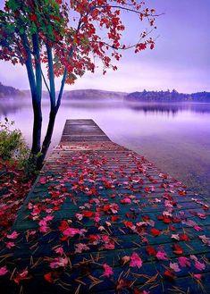 World Best Things: Beautiful Nature Lake Dock, Thousand Islands, Canada Beautiful World, Beautiful Places, Beautiful Pictures, Beautiful Scenery, Amazing Places, Natural Scenery, Beautiful Nature Photos, Beautiful Flowers, Beautiful Nature Wallpaper
