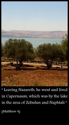 Old olive trees by the shores of the Sea of Galilee, in Capernaum   www.wherejesuslived.com