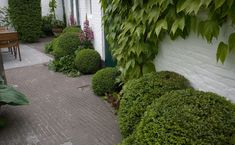 Landscape Focused: landscape, garden design ideas — Small garden project - Begijnhof te Hoogstraten by...
