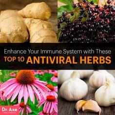 Antiviral herbs - Dr. Axe http://www.draxe.com #health #holistic #natural