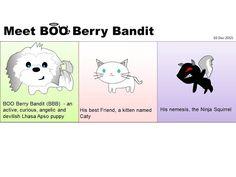 Meet BOO Berry Bandit: Here it goes. Meet Boo's friend, a white kitten n...