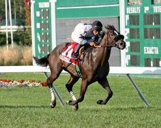 Flay Mignon and jockey Paco Lopez win the Colleen Stakes by 1 lengths Sunday. Forest Camp, Thoroughbred, Racing, Horses, Third, Sunday, Animals, Animales, Domingo
