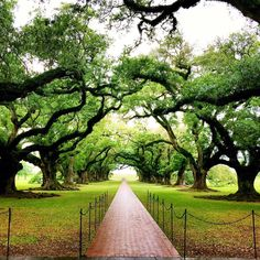 .@Oak_Alley is not to be missed. These 300 yr old oaks are sure majestic. #onlylouisiana
