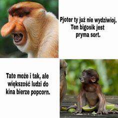 #nosacz#janusz#meme#haha#xd#polak#polskie#memy Wtf Funny, Funny Memes, Polish Memes, Dead Memes, Cool, Haha, Comedy, Humor, Life