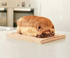 A Pug Loaf - Funny pictures and memes of dogs doing and implying things. If you thought you couldn't possible love dogs anymore, this might prove you wrong. Funny Animal Jokes, Cute Funny Animals, Funny Dogs, Weird Dogs, Funniest Animals, Happy Animals, Animal Pictures For Kids, Funny Animal Pictures, Animal Pics