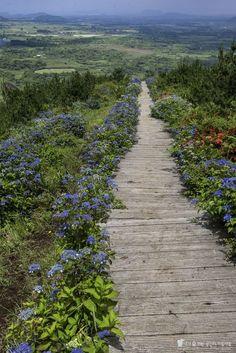 제주도 최고의 산수국 명소, 영주산 천국으로 가는 계단 Sense Of Life, Space Mountain, Jeju Island, Landscape Photographers, Paths, Places To Go, Scenery, Country Roads, Adventure