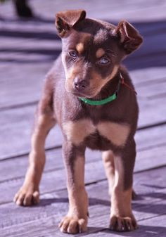 See more Top 10 Cheapest Dog Breeds