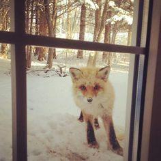 《討餅乾吃的小松鼠》續篇 竟然連狐狸也來了Σ(゚ロ゚)