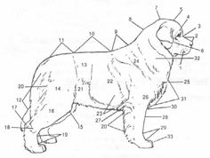 The anatomical points of the Newfoundland Dog. Complete the quiz found at:  http://www.ncanewfs.org/anatomyfillin.pdf