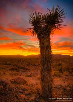Joshua Tree National Park - Order fine art prints of this photo starting at $35.95.