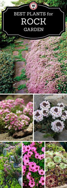 32 Best Plants For Rock Garden Images Outdoor