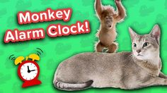 Monkey Alarm Clock & Grinning Horses! // Funny Animal Compilation… #funnypetvideos #funnyanimals