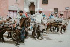 Marrakesz Medyna - co zobaczyć w Marakeszu. Carousel, Fair Grounds, Carousels, Carousel Horses