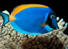 """Dory """"Just keep swimming."""""""