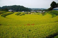 A Rice Terrace Photo by Tatsuo Kawasaki -- National Geographic Your Shot