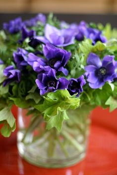 flowers a-z: a is for anemone | Design*Sponge