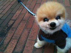 It's a dog. Not a bear. Not a stuffed toy.