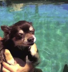 swimming casually Light Take, Pizza Bites, Funny Stuff, Lol, Beach, Swimming, Animals, Random, Funny Things
