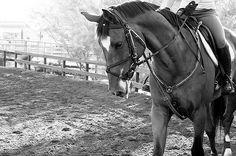 Beautiful horses 🐎🐎