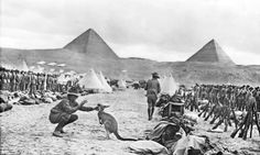 Lines of the 9th and 10th Battalions at Mena Camp looking towards the Pyramids. The soldier in the foreground is playing with a kangaroo the regimental mascot. Many Australian units brought kangaroos and other Australian animals with them to Egypt and some were given to the Cairo Zoological Gardens when the units went to Gallipoli.