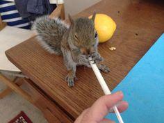 Squirrel & milk