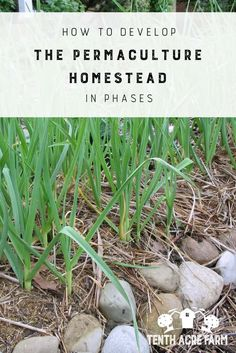 How to Develop the Permaculture Homestead in Phases: Here's how to create a plan that breaks down all your dreams for your permaculture homestead into bite-sized phases of development. #permaculture