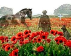 Armistice Day - the eleventh hour of the eleventh day of the eleventh month of Lest we forget. Remembering all the horses and dogs who have given their lives in times of war. Remembrance Day Images, Remembrance Day Poppy, Lest We Forget Anzac, Armistice Day, Flanders Field, Horses And Dogs, War Horses, Horse Horse, Horse Art