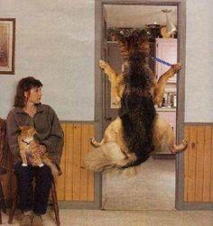 Visita al veterinario