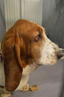 Gårdstunet Hundepensjonat: Herlig å se alle de flotte hundene koser seg på lu...