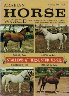 Stallions standing at Tersk Stud in 1976.