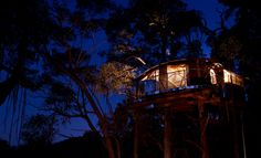 WOLLEMI-WILDERNESS-TREEHOUSE