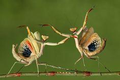 That's dance. (© Hasan Baglar, 2014 Sony World Photography Awards)
