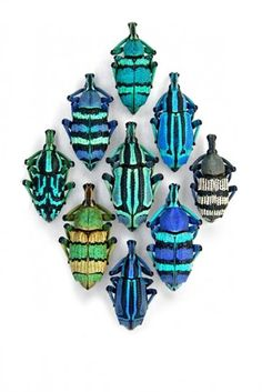 Christopher Marley: Pheromone Gallery - Life in Sketch Cool Insects, Bugs And Insects, The Beetles, Christopher Marley, Cool Bugs, Beetle Bug, Beetle Insect, A Bug's Life, Beautiful Bugs