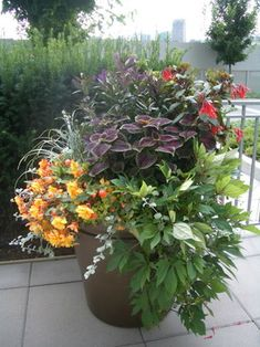 """""""The plants are: Left side (orange/peach flowers) it's a trailing begonia. The grass like foliage behind is Liriope (Variegated). The burgandy foliage is a Coleus. Behind the coleus"""" """"other plants but it seems to do fine in part sun conditions. 3 - 4 hours of sun (morning sun) would be fine. I also fertilize once a week with 15-30-15 (Miracle Grow or any other brand with those numbers)"""