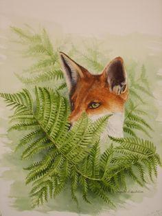 .Fox in the ferns