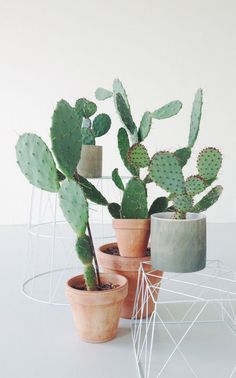 48 Cool Small Cactus Ideas For Home Decoration. The market in cactus house plants is booming and with very good reason. These prickly little guys are great fun, easy to keep and very attractive. Cacti And Succulents, Planting Succulents, Planting Flowers, Cactus Plante, Pot Plante, Small Indoor Plants, Little Plants, Small Cactus, Cactus Flower