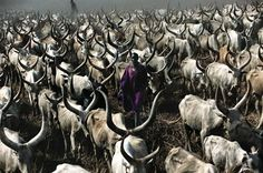 Stunning photos of the Dinka tribe in Sudan. Every boy is given a cattle at their comng of age ceremony. Over time, they shape their cattles horns in to different formations. Story concept inspiration.