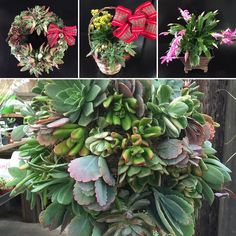 #wreaths #gifts #waterwisegifts by waterwisegardencenter #drought #droughttolerant #landscaping