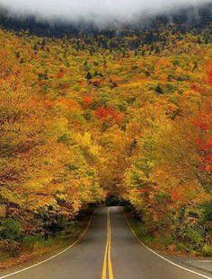 Autum Tree Tunnel