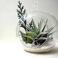 I want one of these air plant terrariums! Finally, something that can live in our tiny, no-outdoor-space apartment.