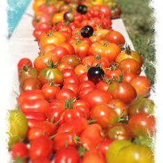 Pomodori!!!