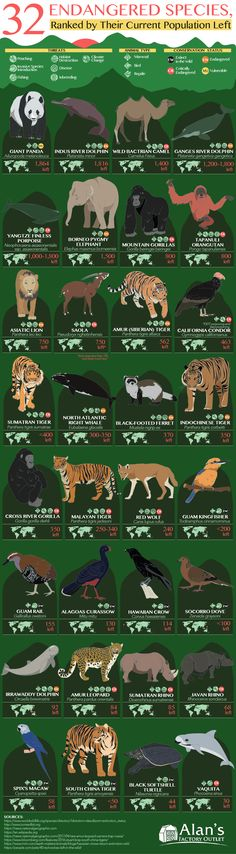 32 Animals That Are Going to Be Extinct Soon (Endangered Species Ranked by Current Population Left) [Infographic] Extinct Animals, Animal Facts, Endangered Species, Tiger Species, Gifts For Pet Lovers, Animal Kingdom, Conservation, Mammals, Wildlife