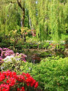 Secret Garden Pond by Carol Groenen Retention Pond, Olive Gardens, Water Gardens, Garden Boxes, Garden Ideas, Garden Pond, Garden Photos, My Secret Garden, Edible Garden