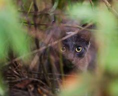 Momma cat (by Taylor Bennett)